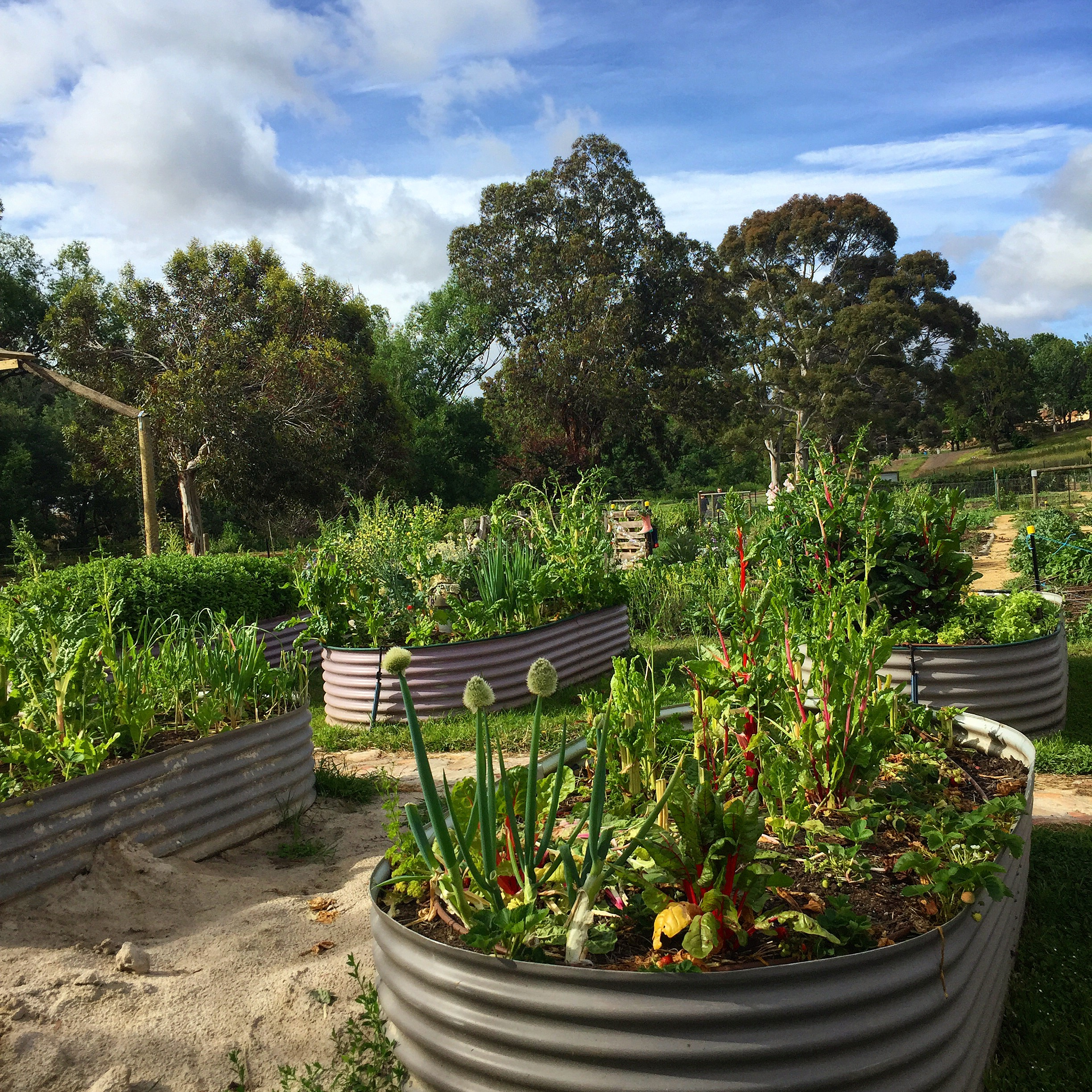 New Norfolk Community Garden, Tasmania