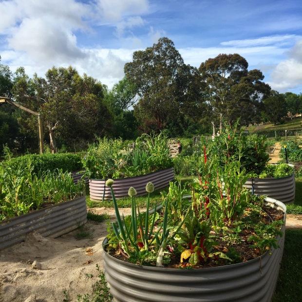 New Norfolk Community Garden, Tasmania
