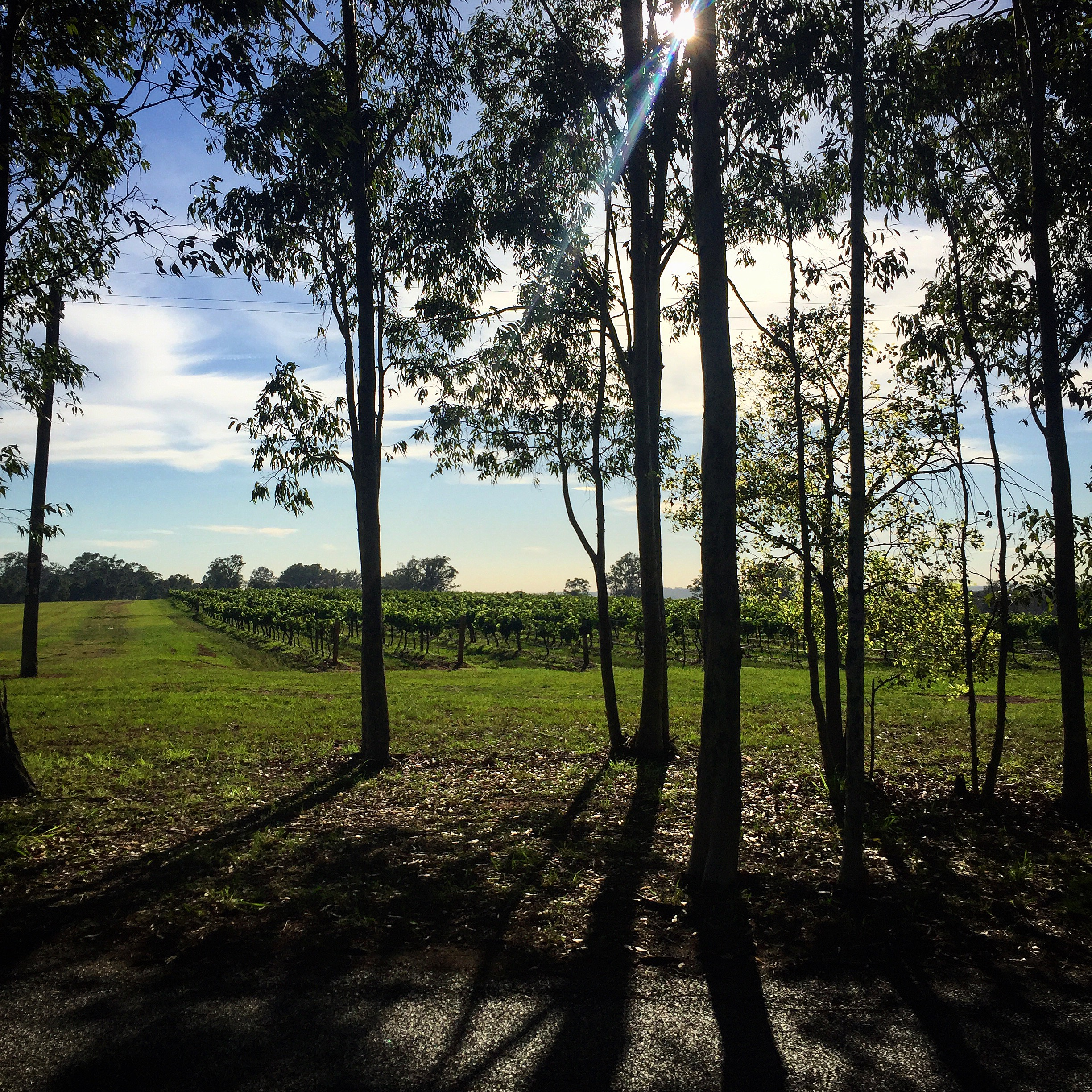 Halls Road Walk Hunter Valley New South Wales