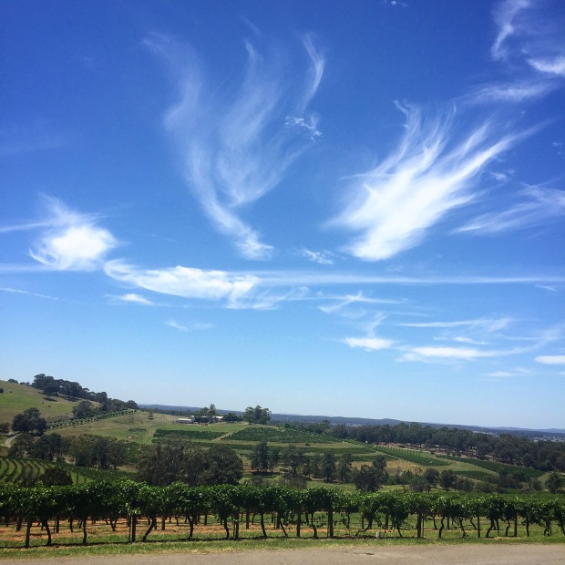 Hunter Valley Vineyard Tour